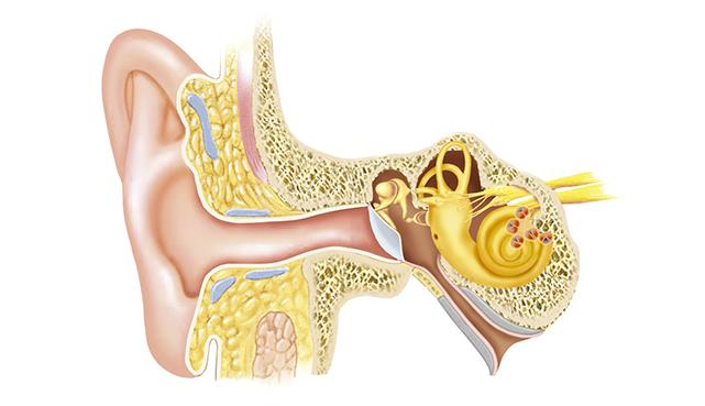 Причины головокружения и тошноты ухо